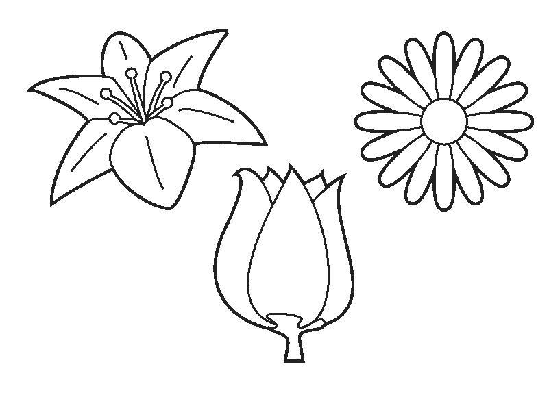 Bloem Tekenen Tulp Parksidetraceapartments